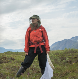 On an expedition to Alaska, Hollis Woodard and her colleagues collected Arctic bumblebees.